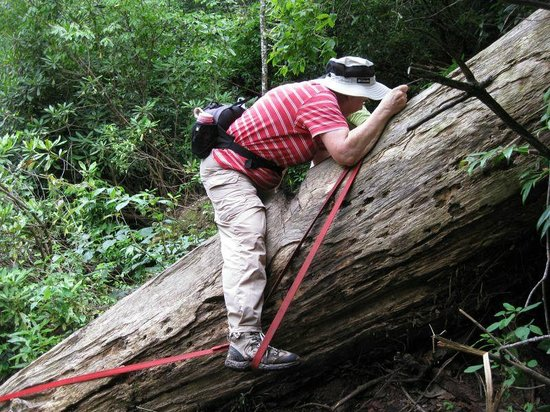 Chattooga River Trail: Stirrup attached by bolt to tree
