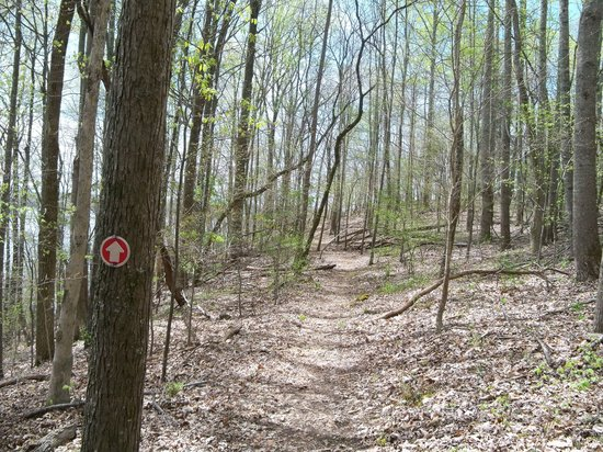 Tims Ford State Park: Lost Creek Overlook Trail