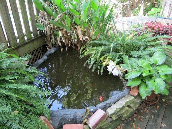 The Lattice Inn: Pond