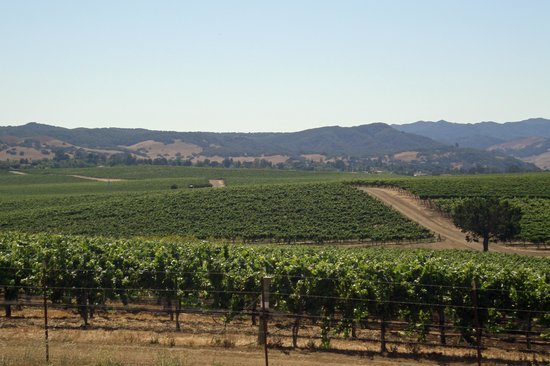 Niven Family Wine Estates : Beautiful views of rolling vineyards from Baileyana