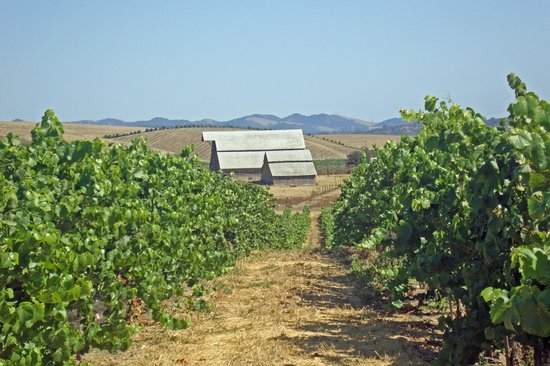 Niven Family Wine Estates : View of Vineyards