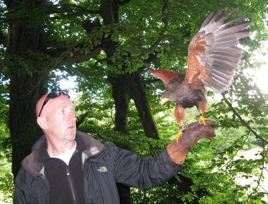 Killarney Falconry : Geoffrey with Alfie