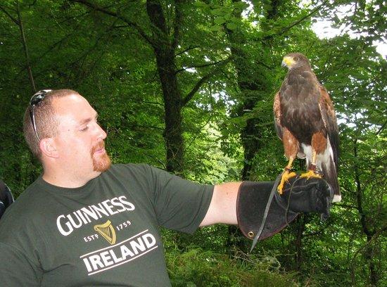Killarney Falconry : Me holding Alfie