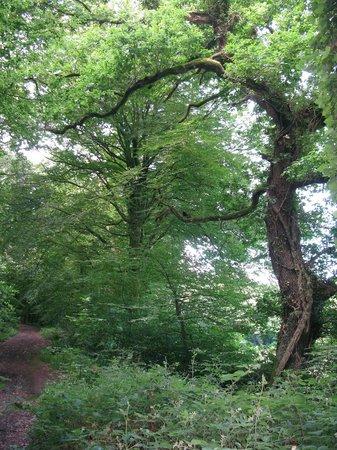 Killarney Falconry : Our Hawk Walk pathway