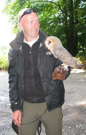 Killarney Falconry : Geoffrey with his pet owl