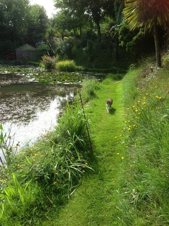 Bennetts Water Gardens: Our cat companion.