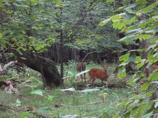 Woodruff House Bed & Breakfast: Wild animal