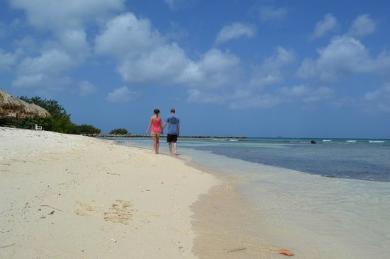 Beach picture of divi aruba phoenix beach resort palm - Divi beach aruba ...