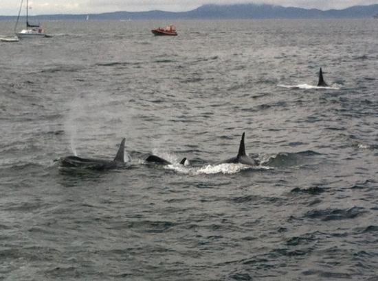 Orca Spirit Adventures : wow!