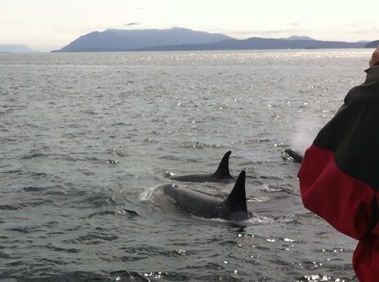 Orca Spirit Adventures : how amazing