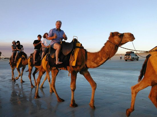 Ships of the Desert : The camel's name is 'Ned'.