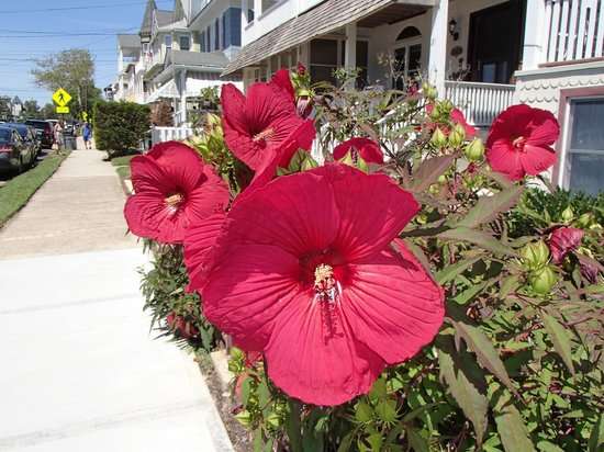 The Sea Spray Inn: Beautiful flowers in front of the Sea Spray