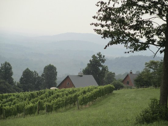 ‪Chester Gap Cellars‬