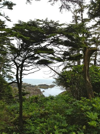 Coast & Toast Bed & Breakfast: Views from the Wild Pacific Trail