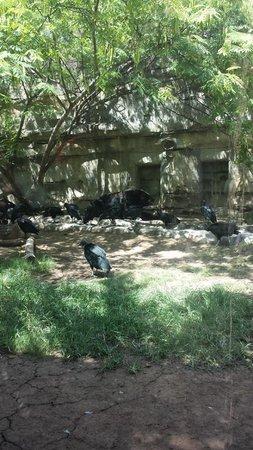 Cameron Park Zoo: 2