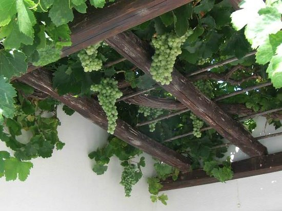 Eleni Rooms: Front Private Deck: I could not resist eating the grapes
