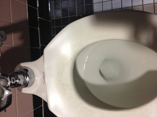 Six Flags New England: Gross toilets due to lack of cleaning causing deterioration.