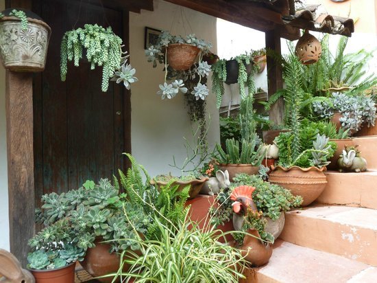 Bela's B&B: beautiful courtyard