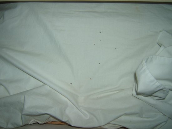 DEAD BUGS ON EXTRA SHEETS