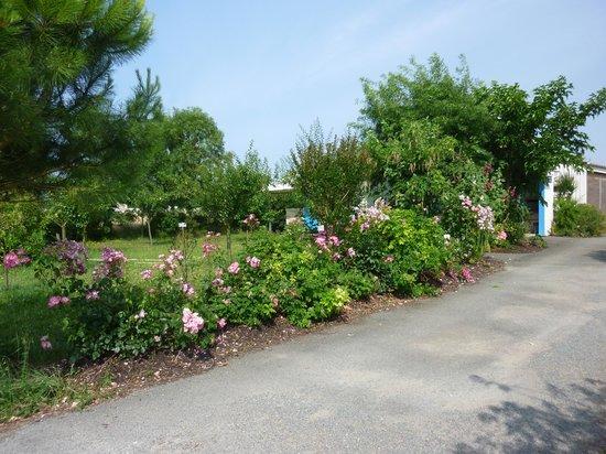 Aire Naturelle de Camping Le Verger : Bordure de Fleurs menant aux sanitaires