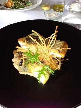 fish barramundi
