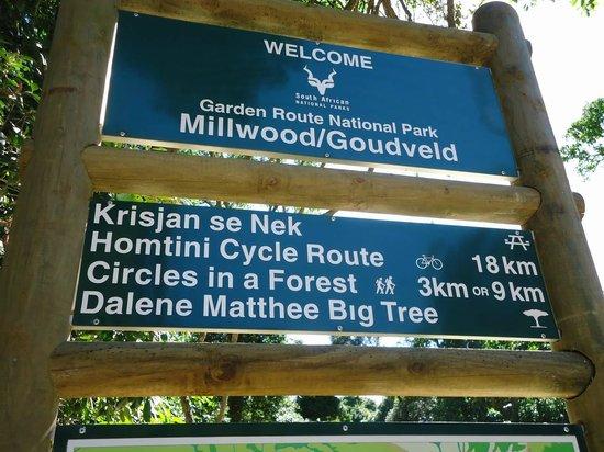 Dalene Matthee Memorial: Garden Route National Park - Millwood/Goldfields