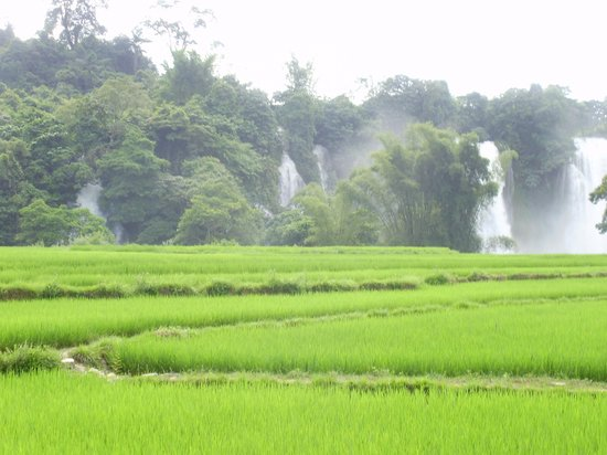 Vietnam Jeep Private Day Tours: Broght green paddy field in front of the waterfall