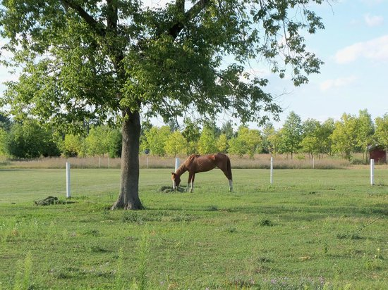 Willow Pond Bed, Breakfast and Events: Horse