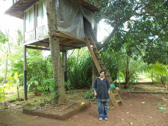 Atithi Parinay Homestay: Tree house
