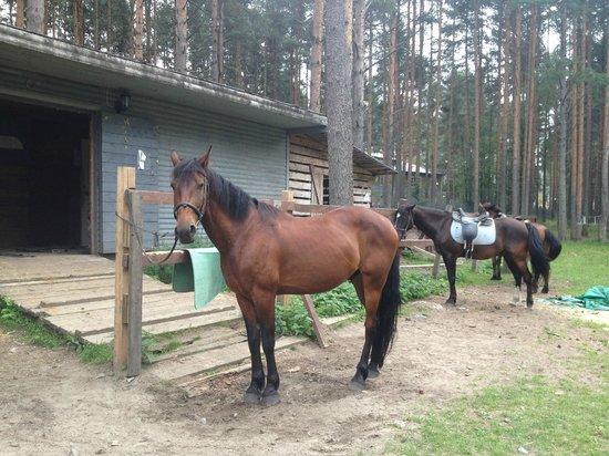 Derevnya Alexandrovka: Лошадки