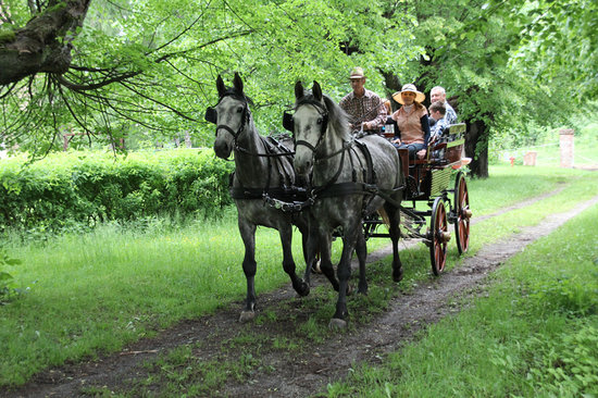 Stadnina Studniska - Carriage Day Tours