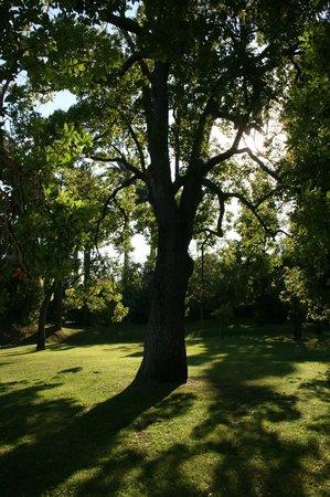 Médiathèque de Noailles : Villa Rothschild - le jardin