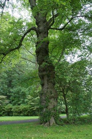 Winterthur Museum, Garden & Library: grand old tree