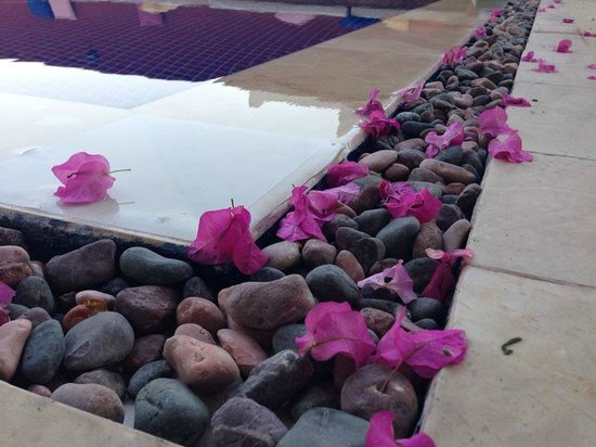 La Brezza Suite & Hotel: Havuz'dan bir kesit...