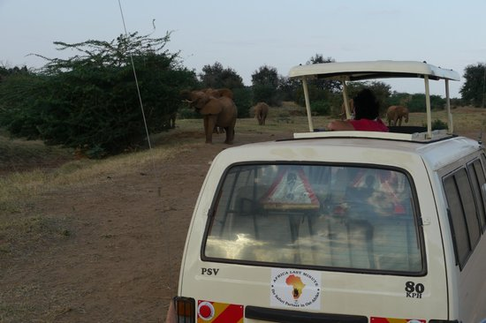 Big 7 Kitheka Safaris Day Tours : The type of van