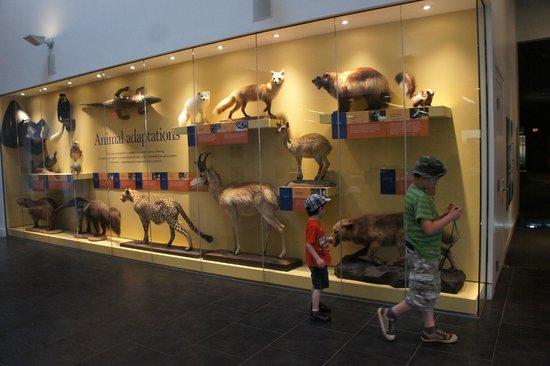 Delaware Museum of Natural History : nature exhibit