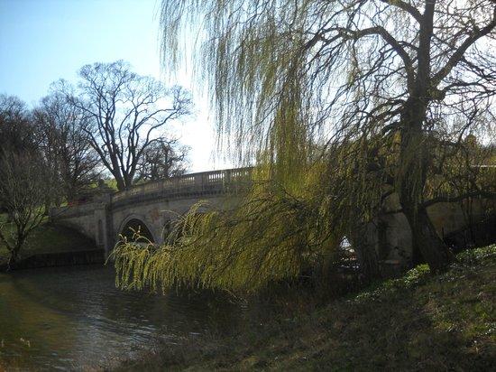 Burghley Park: a bridge in the bark