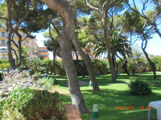 Hotel Riu Concordia: jardin côté piscine