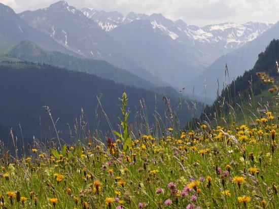 Strassberg valley near Langwies
