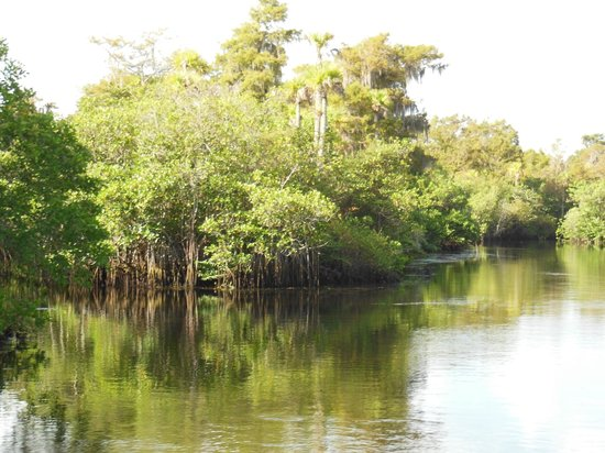 Jonathan Dickinson State Park: Loxahatchee River