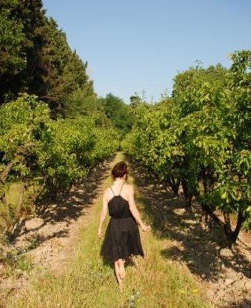 Mas de Capelou: Pear orchard