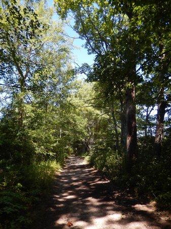 Blue Hills Reservation: Path