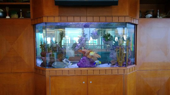 Hilton Garden Inn Palm Coast: Salt Water Aquarium