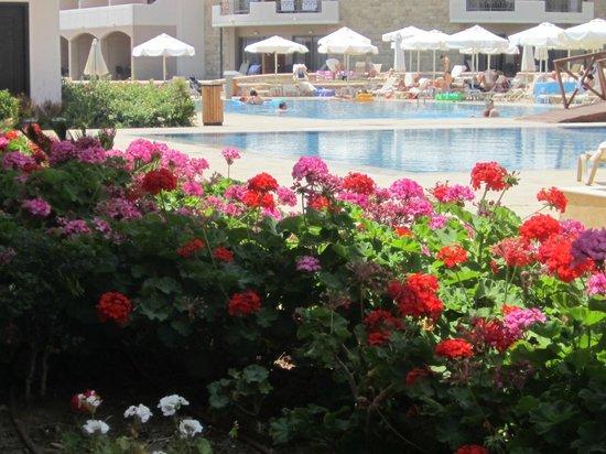 La Marquise Luxury Resort Complex: ΑΝΘΗ ΣΤΙΣ ΑΤΕΛΕΙΩΤΕΣ ΠΙΣΙΝΕΣ
