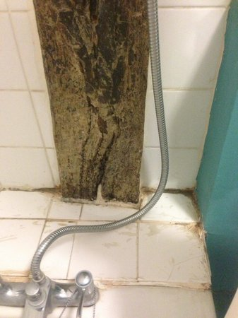 The George Inn: Mould in the bathroom