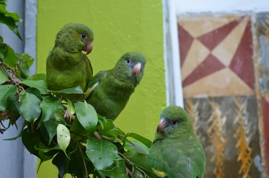 Hotel La Casona Iquitos: the birds at La Casona