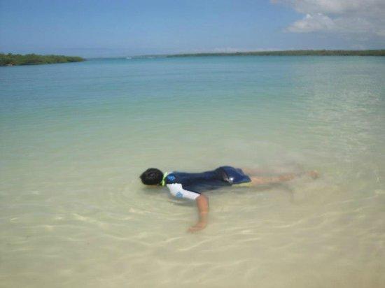 Galapagos Beach at Tortuga Bay: Snorkeling