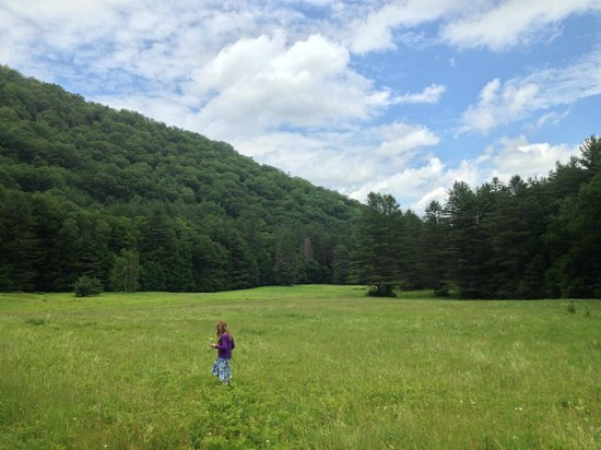 Mohawk Trail State Forest: Hiking trails