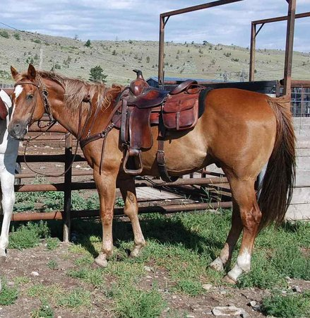 Bonanza Creek Guest Ranch: My boy, Flynn