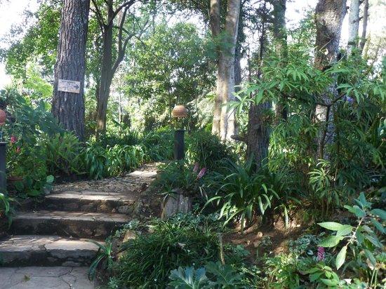 Na Bolom Cultural Centre: Gardens